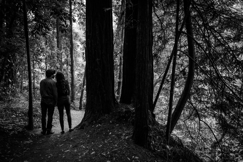 Couple silhouetted in forest B&W  - Engagement Photos in Nisene Marks Forest in Aptos, CA - by Bay Area wedding photographer Chris Schmauch