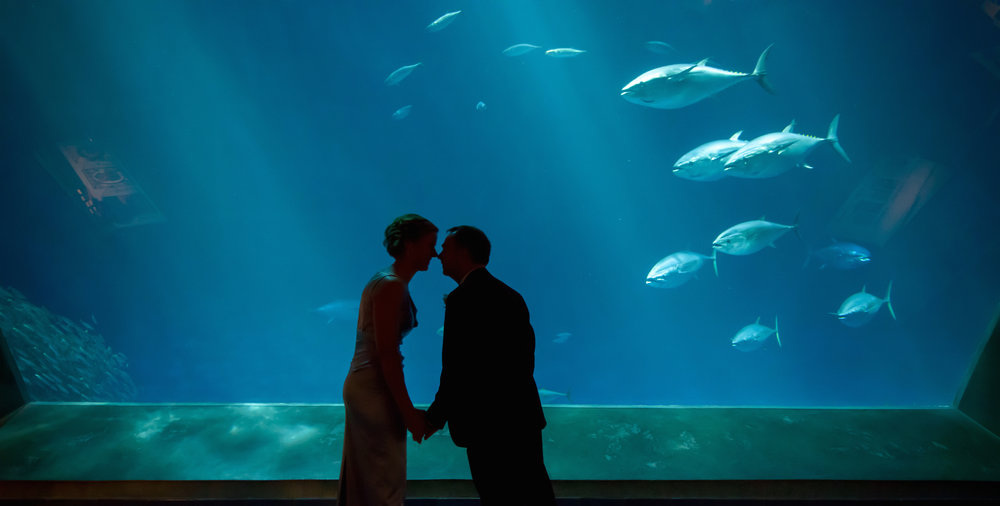 Silhouetted couple kissing in front of big fish tank. Wedding photos taken by Chris Schmauch at the Monterey Bay Aquarium in Monterey, California.