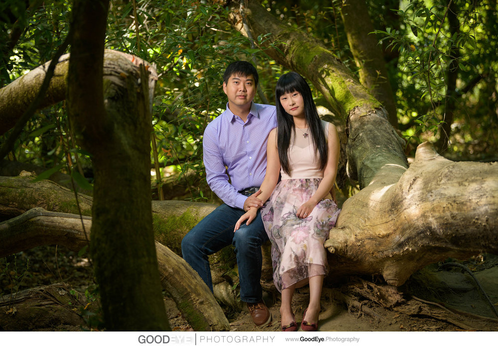 Henry Cowell Redwoods in Felton - Forest Engagement Shoot - Amy