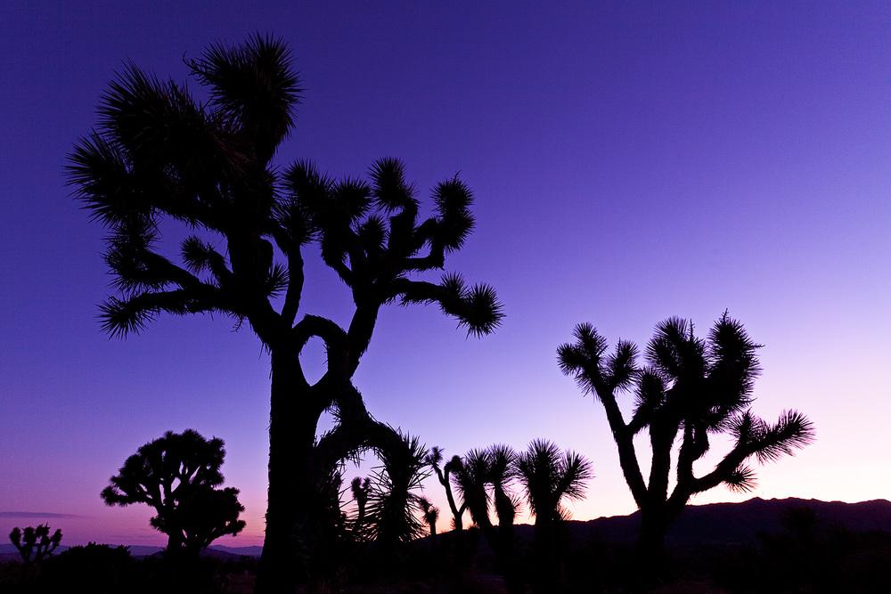 joshua tree sunrise.jpg