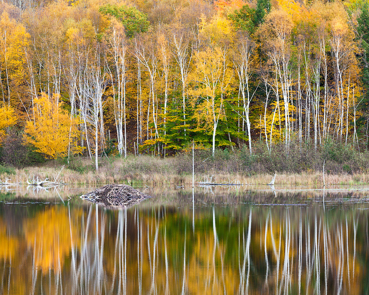 Beaver Dam Pond in the Fall