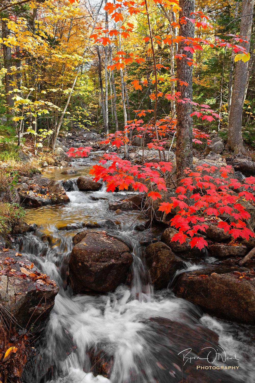 jordan-pond-stream-fall-color.jpg
