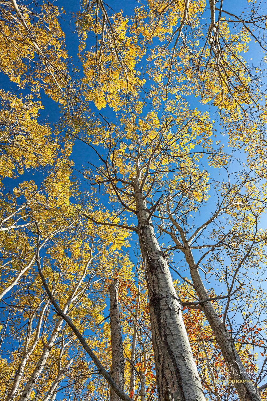 sieur-de-monts-color-overhead.jpg
