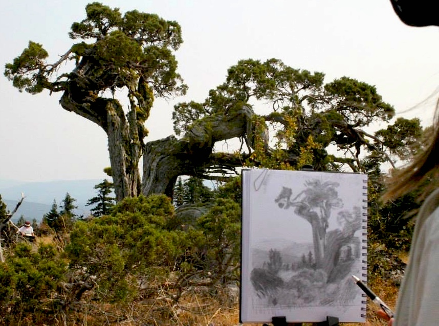 At Hobart Bluff: Twisted tree and Sarah Burns' sketch. Images by RShaw 2015.