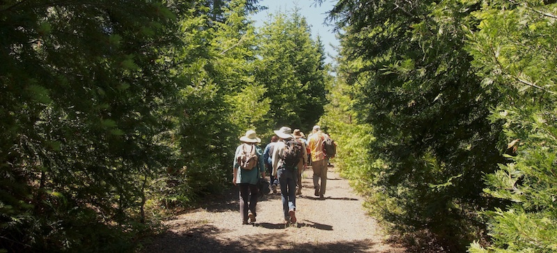 The group walks through a tunnel of conifers: Incense cedar, Douglas fir, white fir, ponderosa pine, sugar pine, and Western white pine. Photo by K Boehnlein