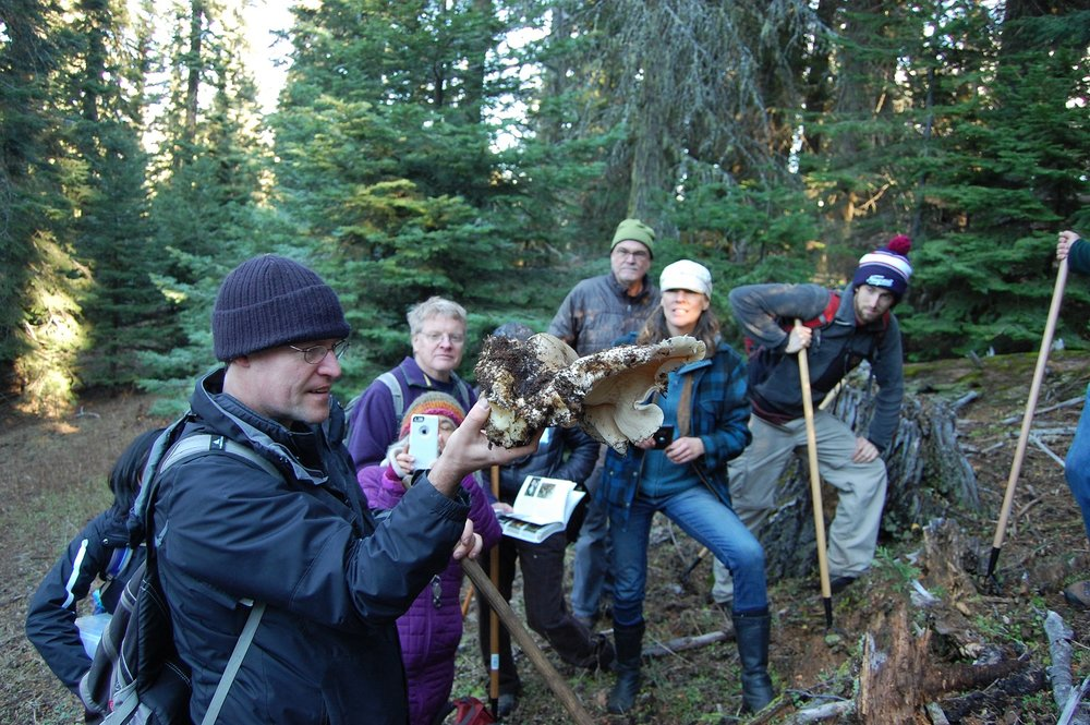Mycologist Scott Loring and Citizen Scientists in Cascade-Siskiyou NationaL Monument, during BioBlitz 2016: fungi.