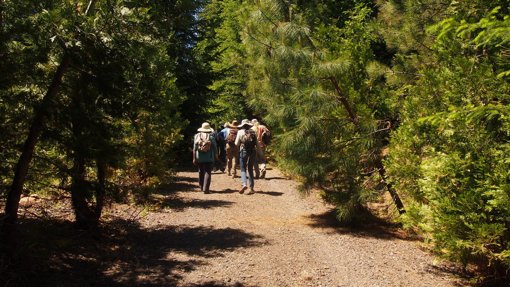 Walk through a corridor lined with sugar pines, Douglas firs, incense cedars, ponderosa pines, and other conifers.