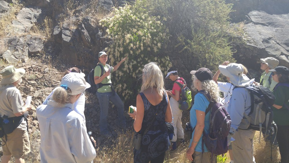 Botanist Sheri Hagood Sheri tells the group about Ocean Spray ( Holodiscus discolor )