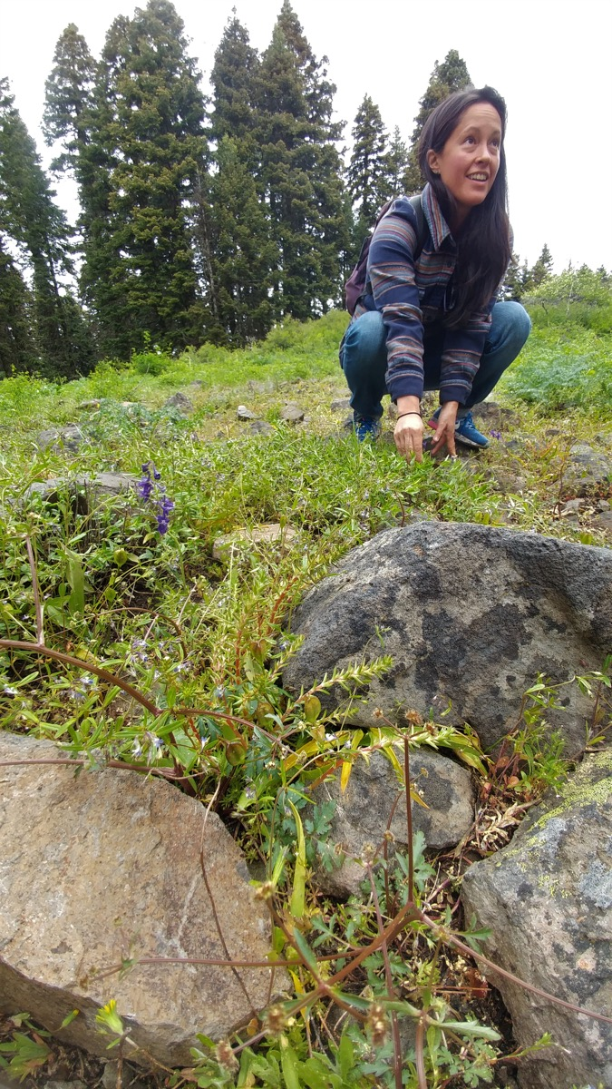Naturalist Jeanine Moy identifies sun-loving lithophytes.
