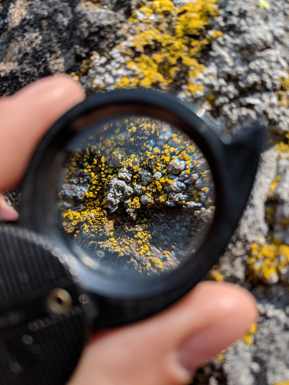 Taking a closer look at the lichens found on Pilot Rock