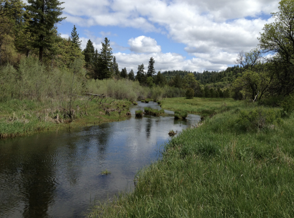 Jenny Creek ambles along the east side of CSNM. Eighteen miles of Jenny Creek are now designated as Wild & Scenic.
