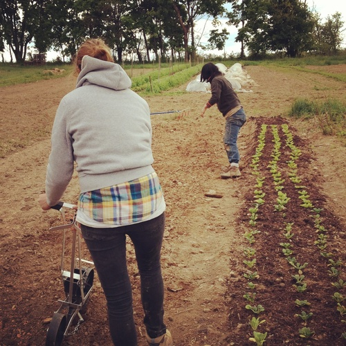 Planting beets with Sarah Sohn (back) and Lisa Augustyniak (front).