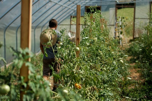 Devin in the greenhouse.