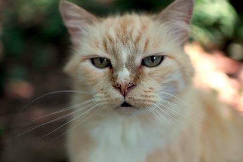 Milo the cat.