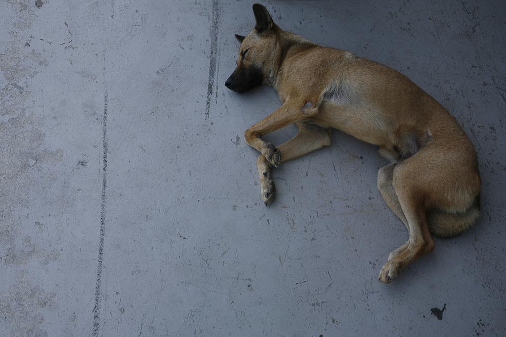 dog days.jpg