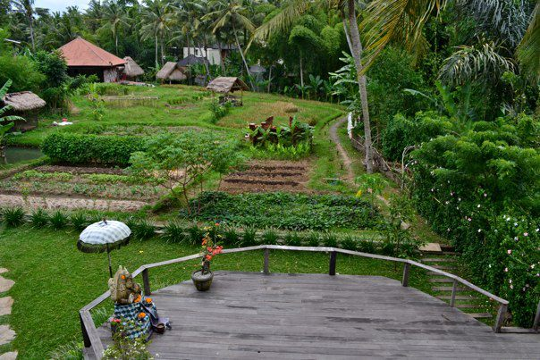 The Yoga Barn in Bali (2012)