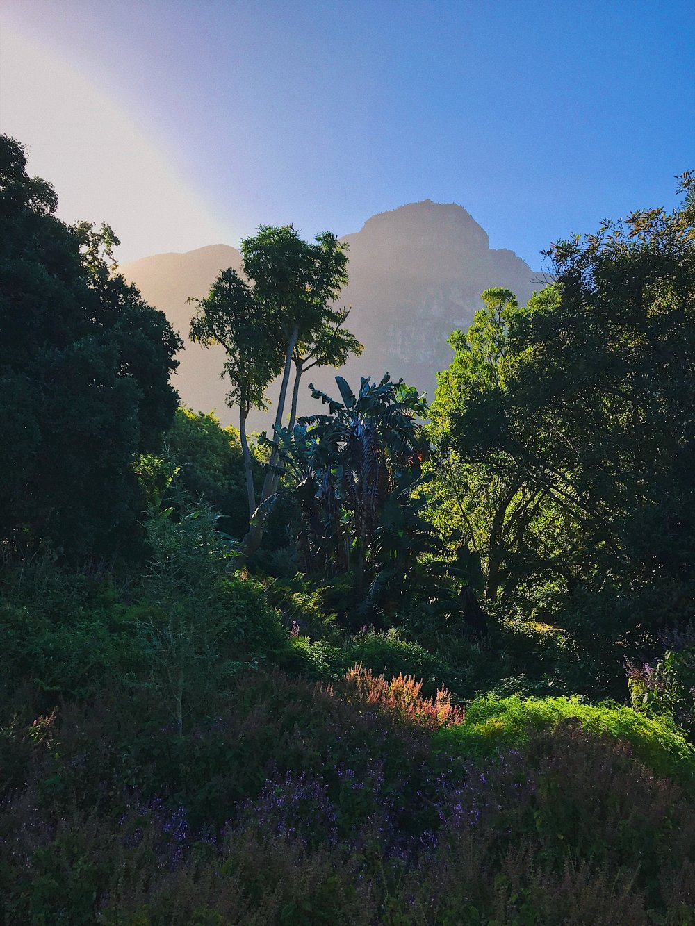 The magical Kirstenbosch Botanic Gardens.