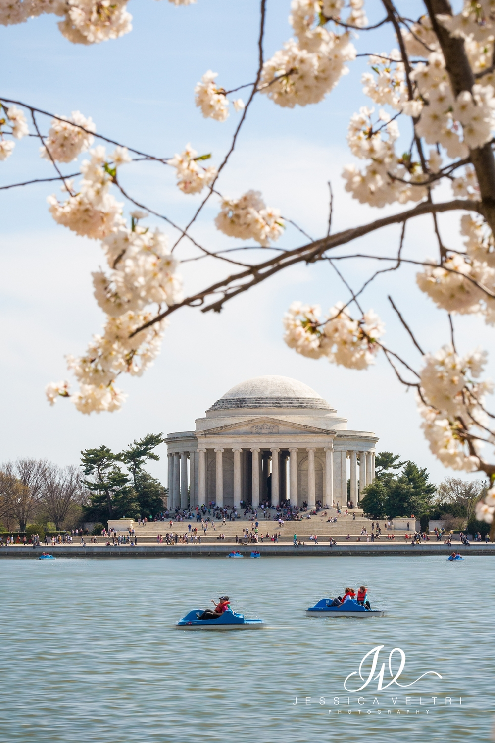 Washington D.C. Jefferson Memorial Cherry Blossoms