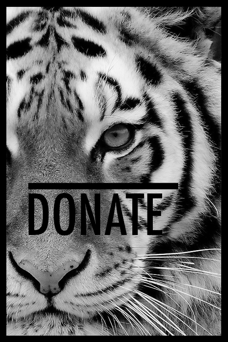 5% of site profits are donated to helping save wild cats! If you would like to help even more, click here!