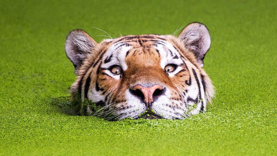 December 2015 // TIGERS