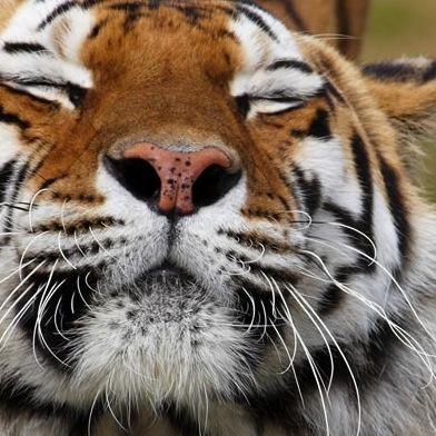 July 2015 // TIGERS