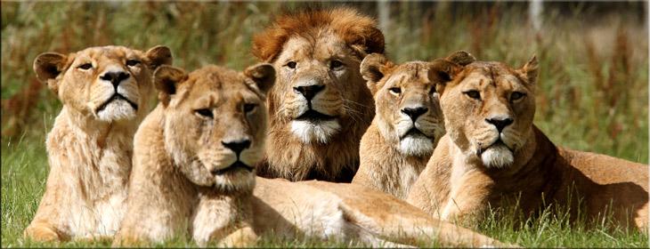 November 2016 // LIONS
