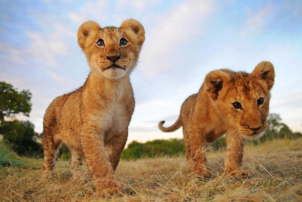 December 2016 // LIONS