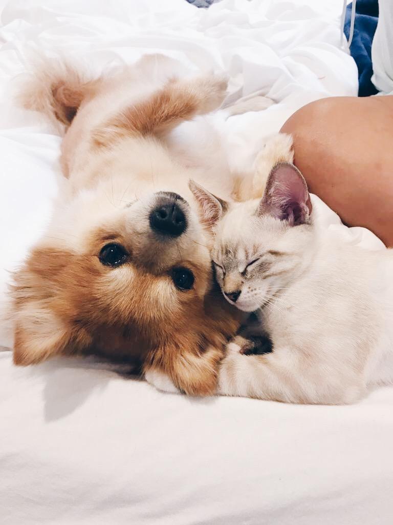 FELINE CO. MASCOTS: CHLOE & CAT