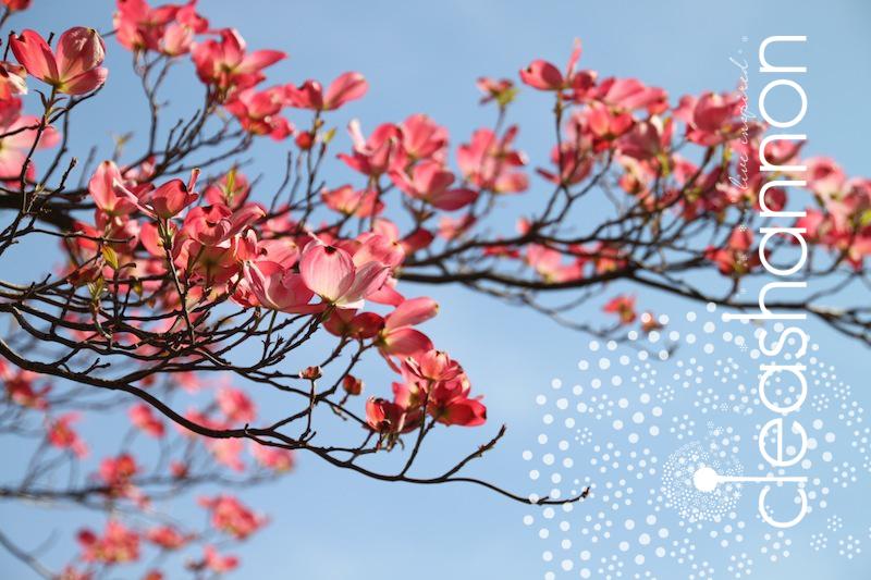 petals-and-sky.jpg