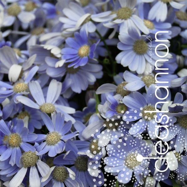 playful-petals.jpg