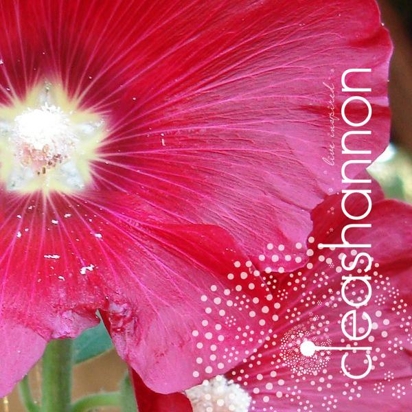 splendor-2.jpg