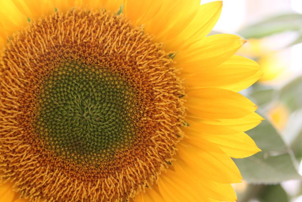 Sunflower Breakfast Bites (640x427)