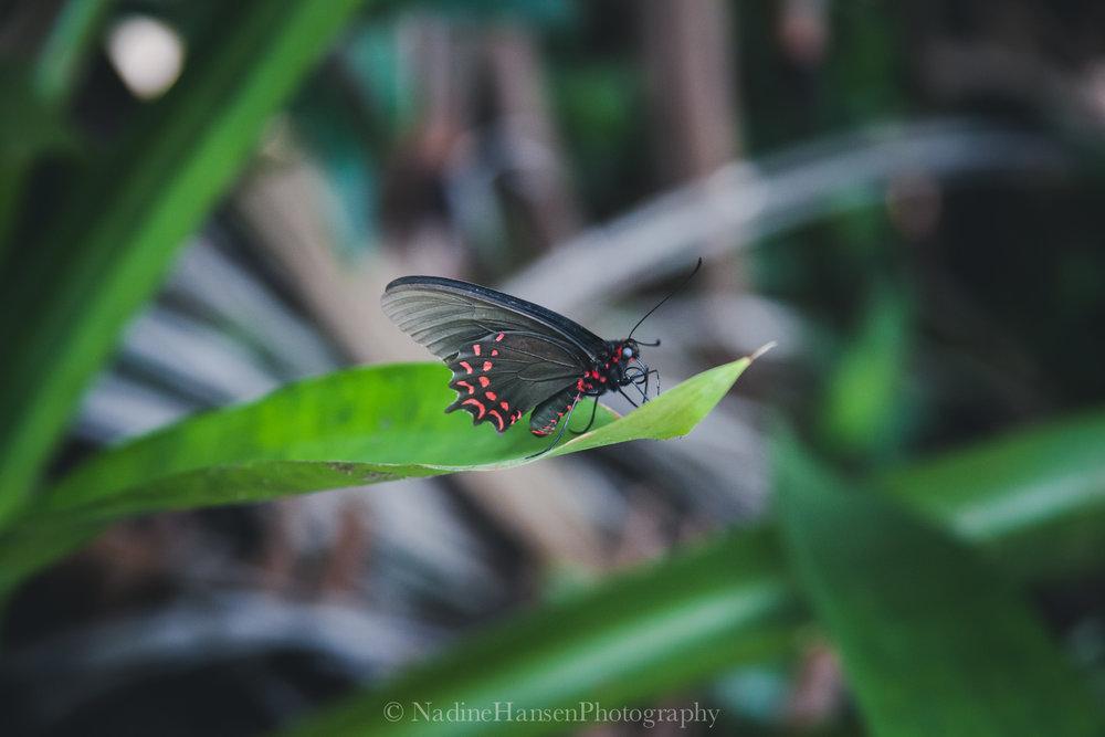 Costa Rica-9.jpg