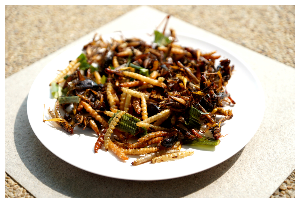 Plate of assorted insects.