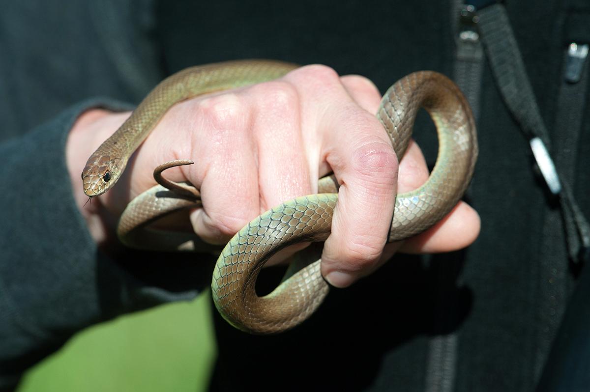 snake fist