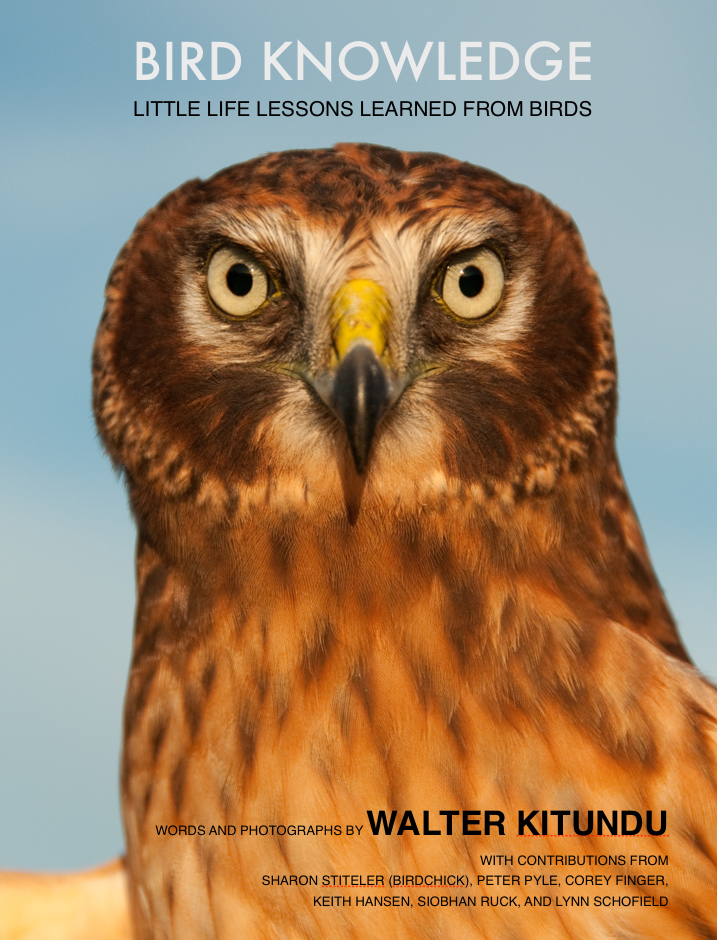 Bird Knowledge Cover.jpg