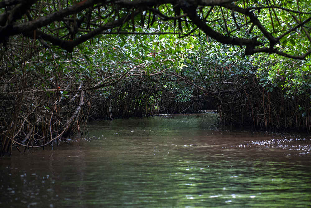 mangrove tunnel.jpg