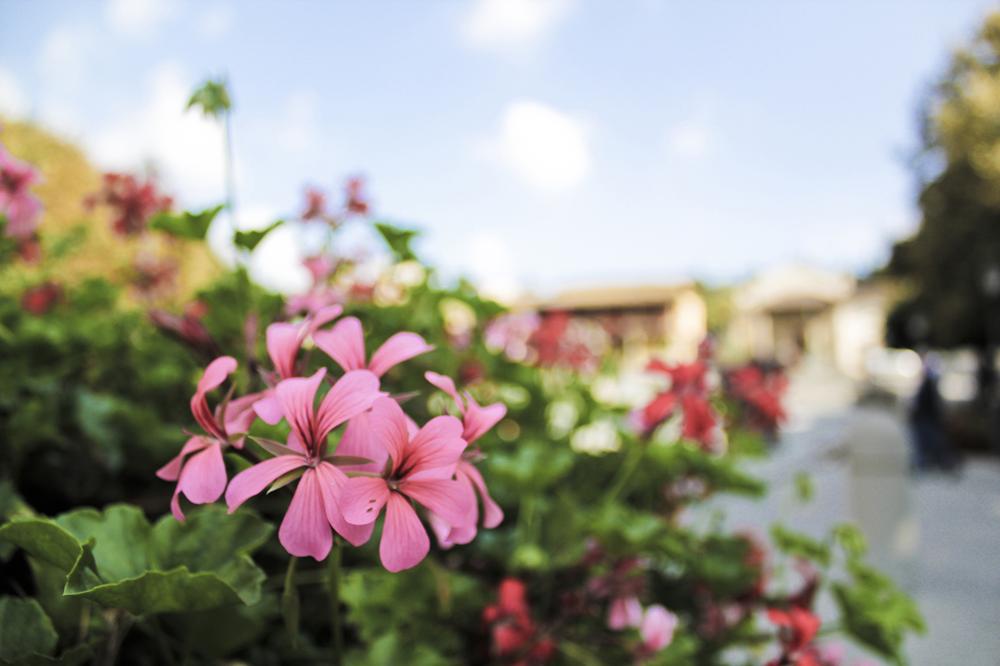 Flores em Florença, 2