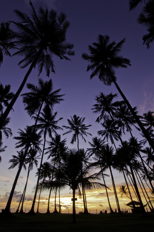 Nascer do sol entre as palmeiras