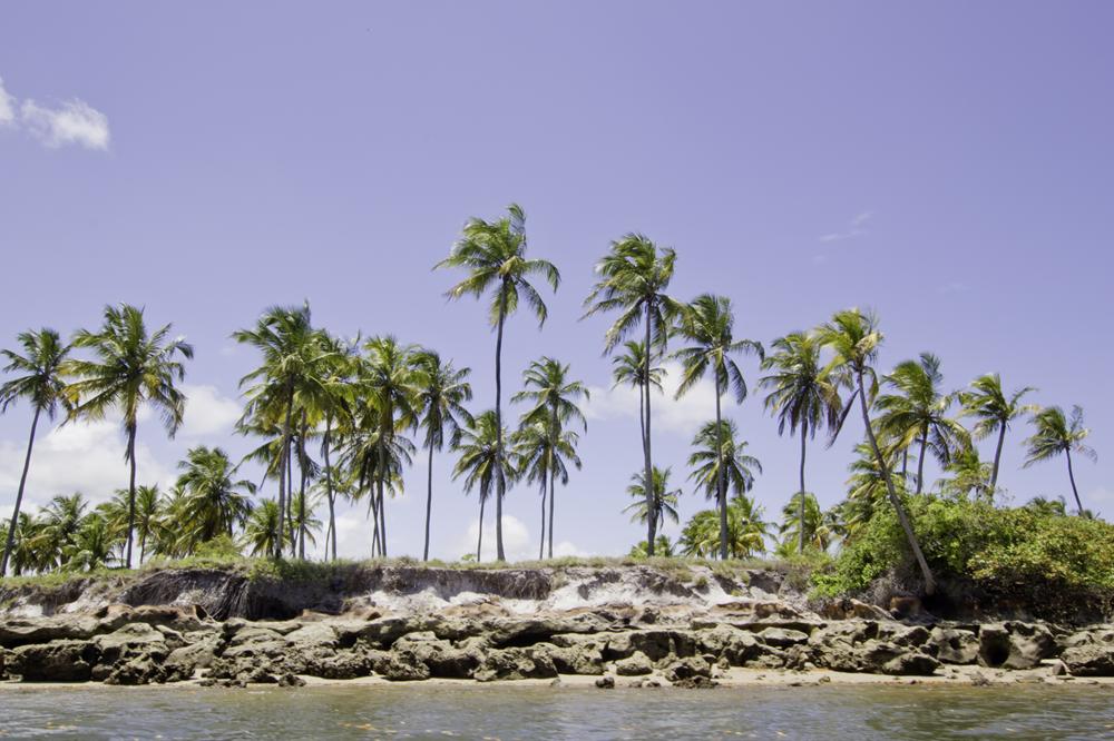 Palmeiras nas margens do rio