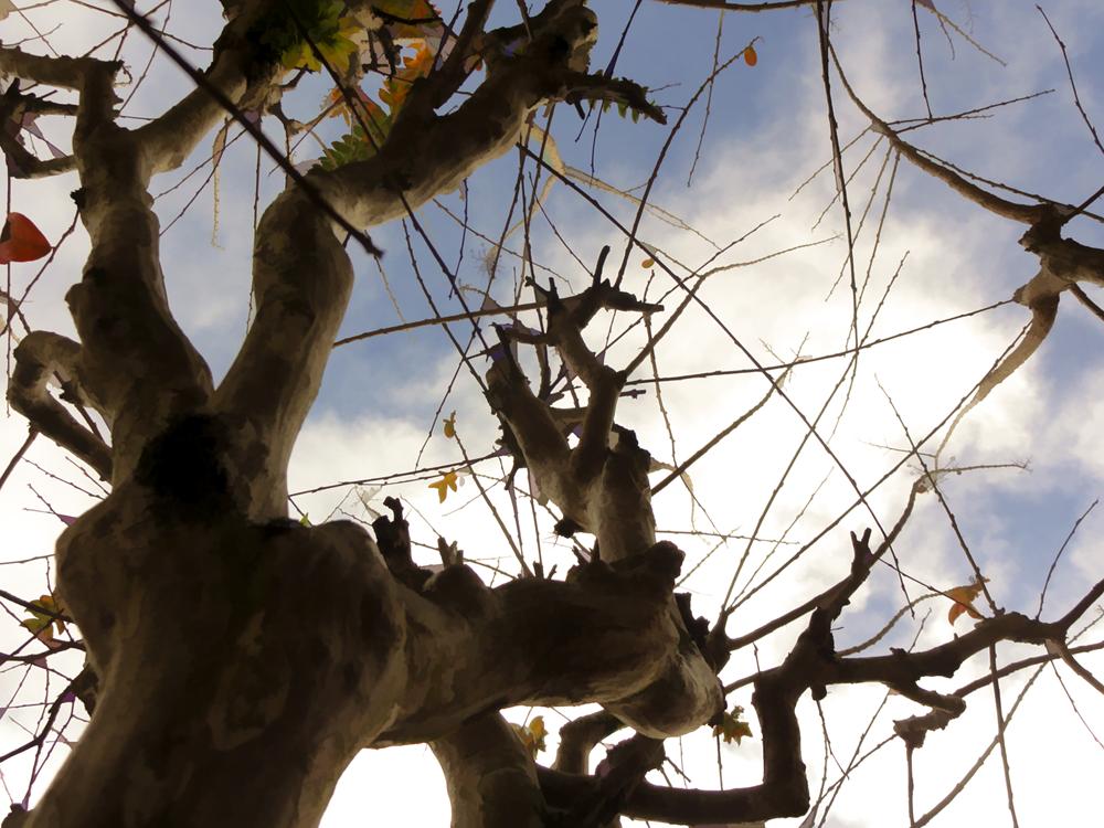 Árvore careca