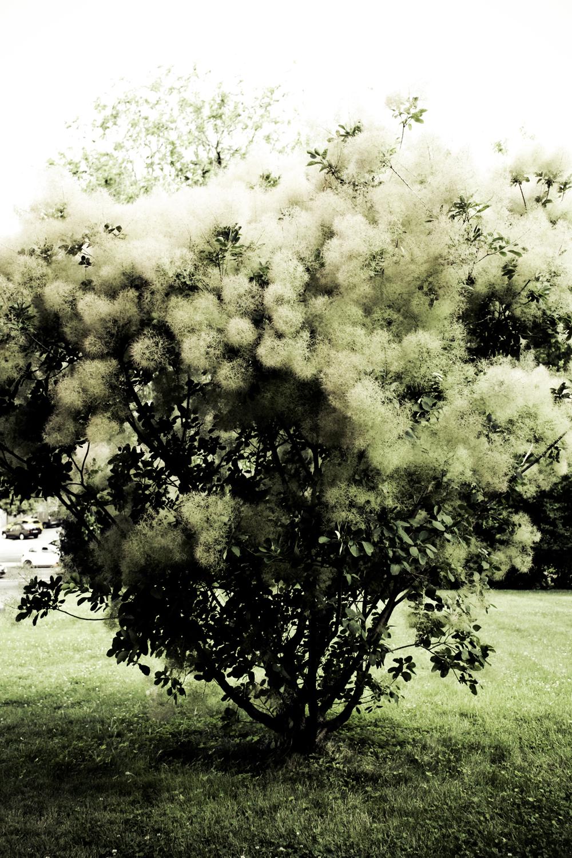 Árvore branca
