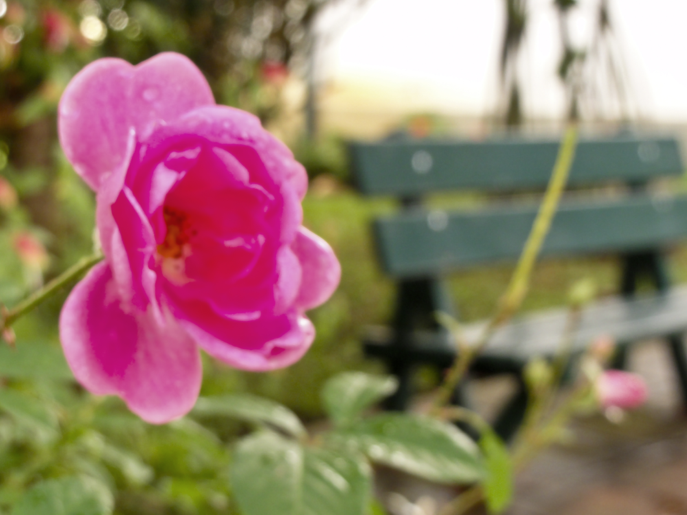 Flor e banco