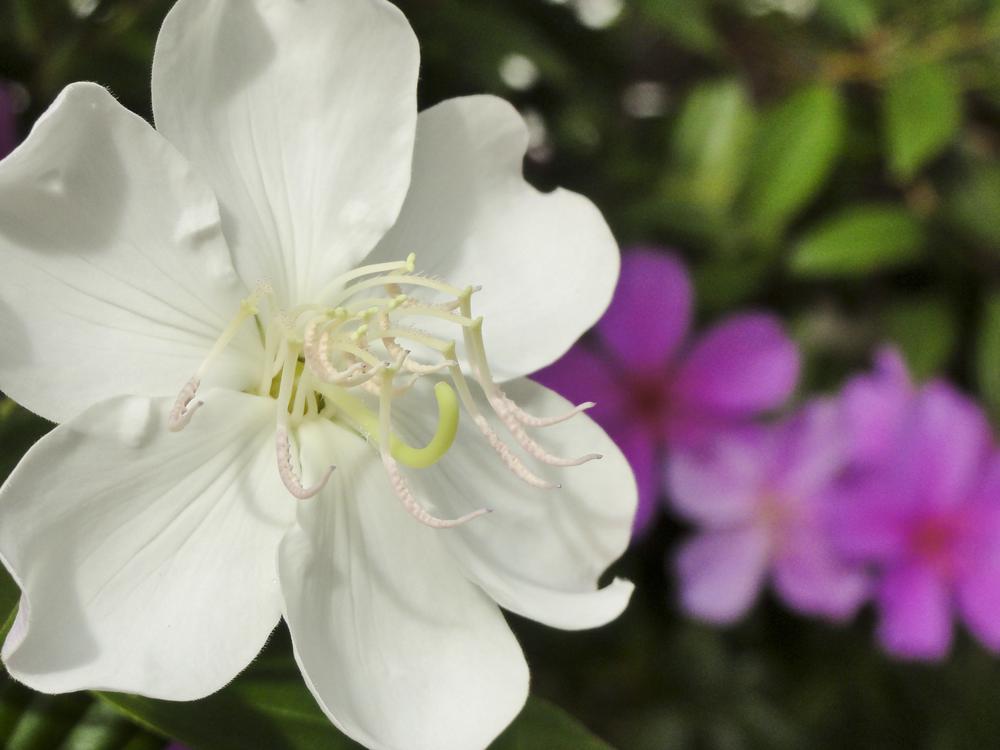 Flores em Friburgo