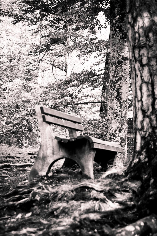 Floresta de Neuschwanstein, 1