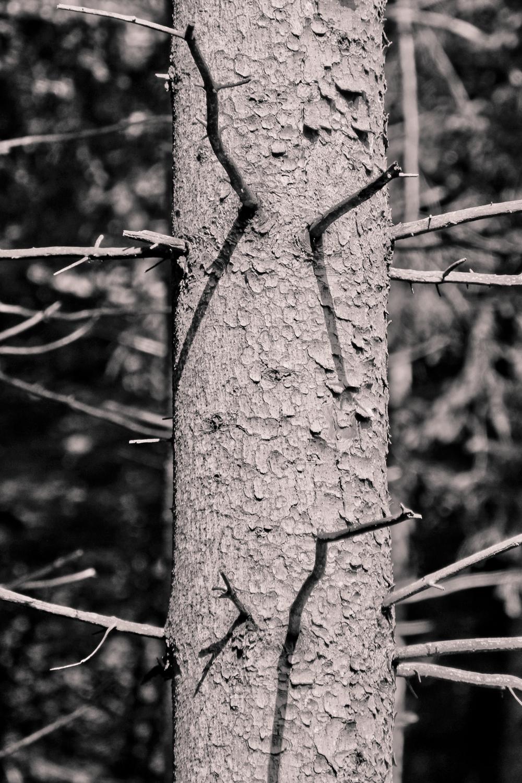 Floresta de Neuschwanstein, 2