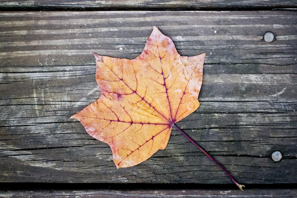 orange leaf.png