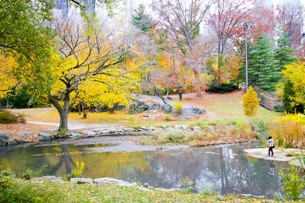 Caçando paisagens no Central Park