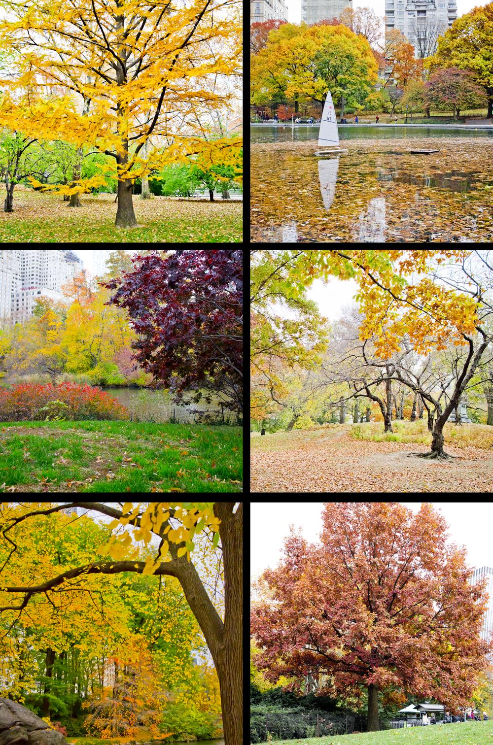 árvore amarela_edited-1.png