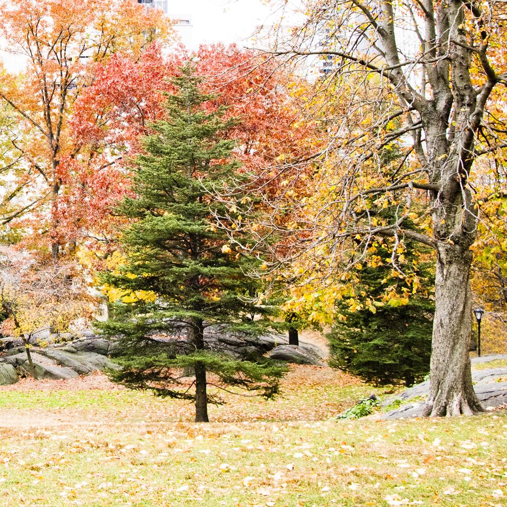 Outono típico